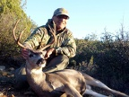 DanM's Arizona mule deer buck fall 2015